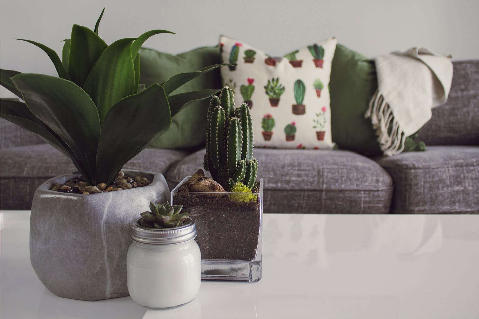 photo of plants on the table